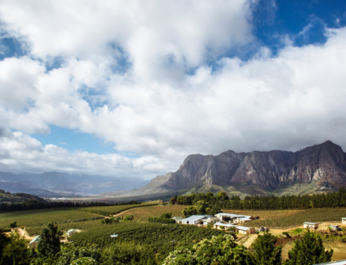 The Western Cape: A Dream Wedding Destination