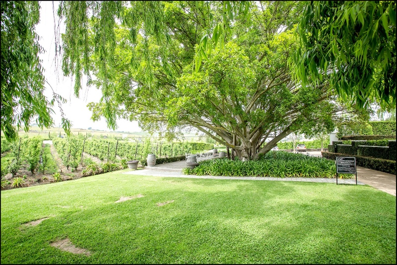 brenaissance-wine-estate-wedding-venue-western-cape-7