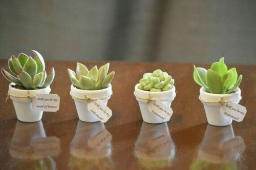 water wise wedding succulents decor flowers